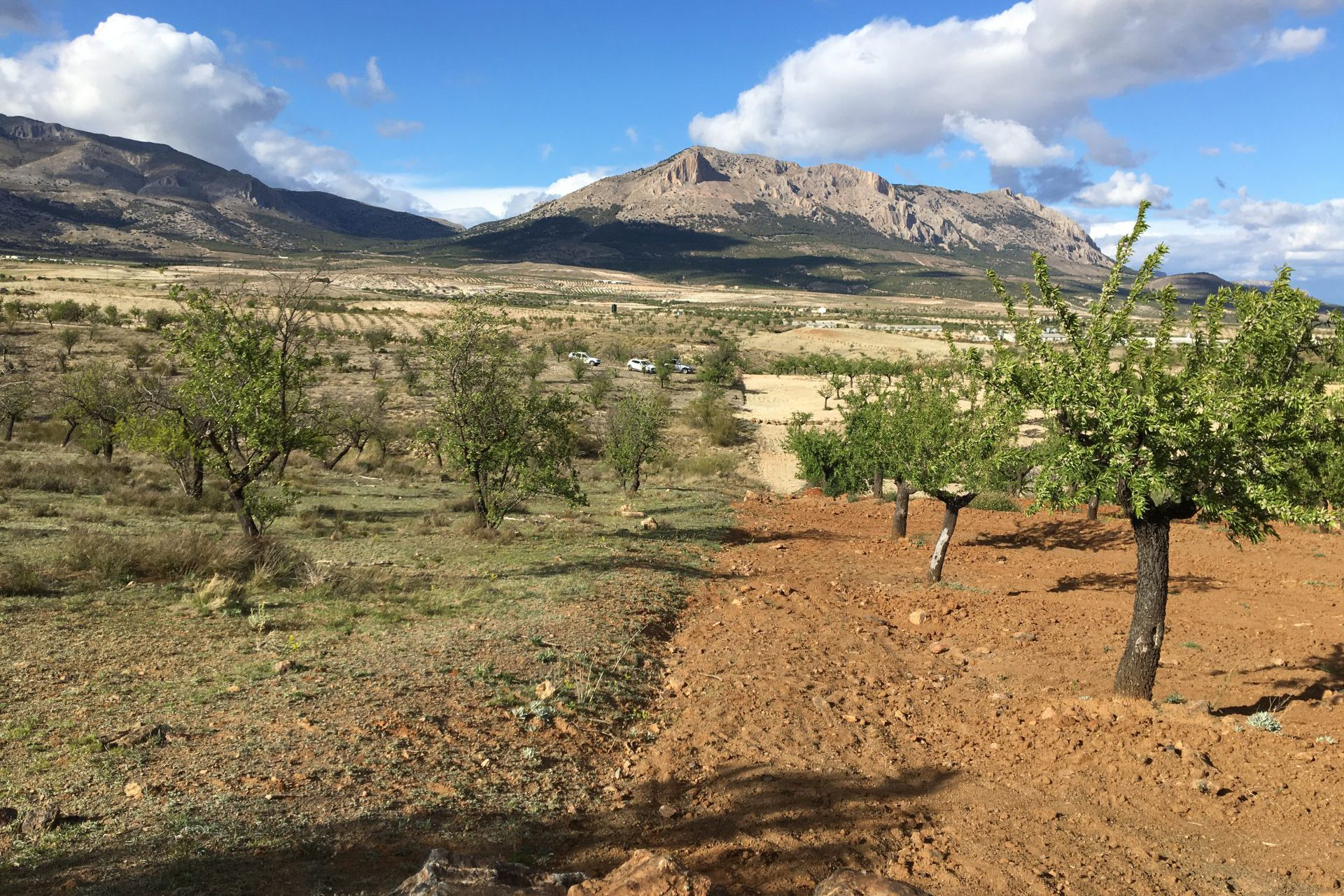 Regenerative almond agriculture in the combined zone of the Altiplano. In the back: the natural zone of the national park Velez Maria.