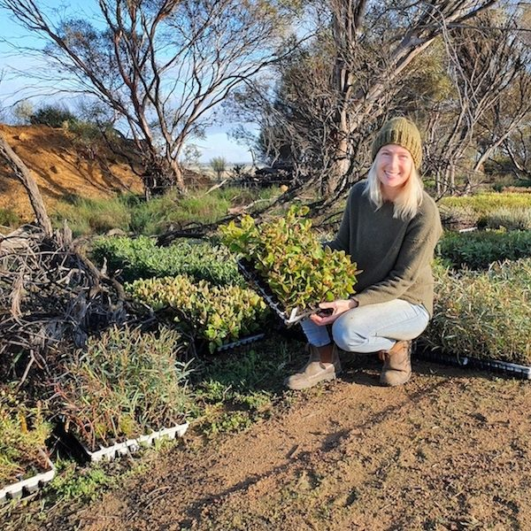 Planting of 23,000 seedlings of more than sixty different species at WOA's East Kulinbah property