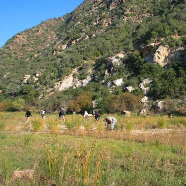 Restoration activities in the Baviaanskloof